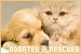 Animals: Adopted and Rescued