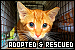 Cats: Adopted and Rescued